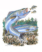 Speckled Trout Framed Prints - Sea Trout Framed Print by Carey Chen