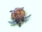 Sea Life Digital Art Originals - Sea Turtle by Ann Powell