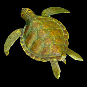 Reptiles Sculpture Posters - Sea Turtle Poster by Diane Snider