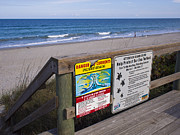 Sea Platform Prints - Sea Turtles and Rip Currents Print by Allan  Hughes