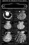 Wall Decor Licensing Posters - Seafood - Shells on french writing  Poster by Anahi DeCanio