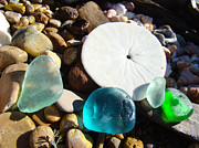 Sea Shell Fine Art Prints - Seaglass art prints Rock Garden Sand Dollar Print by Baslee Troutman Coastal Art Prints