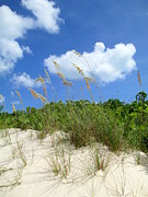 Shore Excursion Prints - Seagrass And Sky Print by Randall Weidner