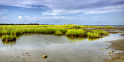 Green Bay Framed Prints - Seagrass Panorama Framed Print by Vicki Jauron