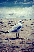 Kelly Digital Art Posters - Seagull 1 Series 2 Poster by Kelly Nowak