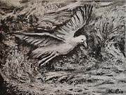 Canadian Art Drawings Prints - Seagull and Waves Print by Kathleen Pio