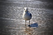 Tara Potts - Seagull at Low Tide
