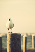 Terry DeLuco - Seagull at the Shore Seaside New Jersey