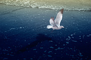 Seagull Color Infrared Print by Dave Beckerman