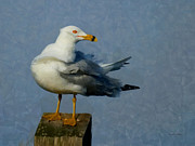 Seagull Digital Art Metal Prints - Seagull Digital Painting Metal Print by Ernie Echols