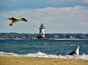 Warwick Framed Prints - Seagull Flying By The Lighthouse Framed Print by Kelly Sullivan