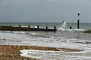 Flying Seagull Prints - Seagull Groyne Print by Anne Gilbert