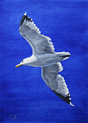 White Bird Posters - Seagull in Flight Poster by Crista Forest