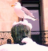 Temperament Art - Seagull in the city by Hilde Widerberg