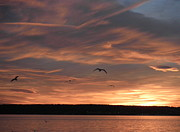 Kate Gallagher - Seagulls in the Sunset
