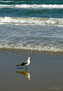 Chanda Henne Posters - Seagull in the Surf Poster by Chanda Henne