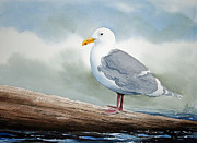 Pacific Northwest Fine Art Print Painting Originals - Seagull by James Williamson