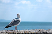 Front Room Digital Art Framed Prints - Seagull Looking Out to Sea Framed Print by Natalie Kinnear