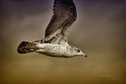 Sea Birds Posters - Seagull Oil Poster by Deborah Benoit