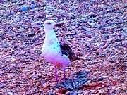 Seacapes Prints - Seagull On Cape Cod Rock Beach Print by Annie Zeno