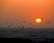 William Havle - Seagull on Sunset