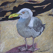 Susan Herbst - Seagull on the Rocks