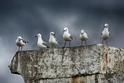 Andrew Hewett - Seagull Photo Shoot