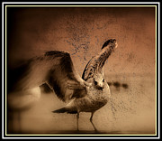 Nature Picture Posters - Seagull ready to fly Poster by Susanne Van Hulst