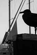 Seagull Silhouette Print by Kaleidoscope Klick Photography