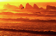 Surf Silhouette Prints - Seagull Soaring Over the Surf at Sunset Oregon coast Print by Dave Welling