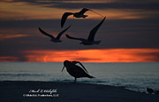Mark Olshefski - Seagull Sunrise 12 12 23...