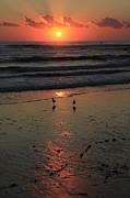 Noel Elliot - Seagull Sunrise