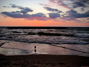 M C Sturman - Seagull with sunset