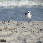 Atlantic Coastal Birds Photo Posters - Seagulls at Fernandina 4 Poster by Cathy Lindsey
