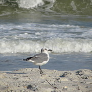 Gulls Art - Seagulls at Fernandina 6 by Cathy Lindsey