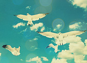 Aves Digital Art - Seagulls at the Beach by Patricia Awapara