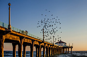 April Reppucci - Seagulls at the Pier