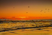 Layered Prints - Seagulls Flying Sunset Print by Robert Bales