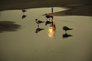 Puddle Digital Art Prints - Seagulls in a Puddle Print by Bill Cannon