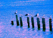 Seacapes Prints - Seagulls In A Row Print by Annie Zeno
