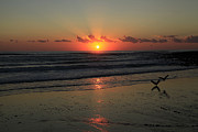 Noel Elliot - Seagulls Landing At Dawn