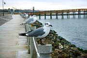 La Porte Framed Prints - Seagulls on Boardwalk Framed Print by Rebecca Collins