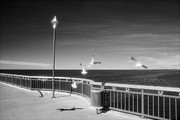 Infrared Photos - Seagulls on the Pier by Colin and Linda McKie