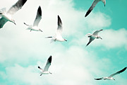 Coastal Decor Prints - Seagulls Soaring Print by Kim Fearheiley