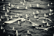 Flying Seagulls Originals - Seagulls by Sompoch Tangthai