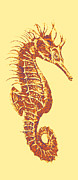 Seahorses Framed Prints - Seahorse- Left Facing Framed Print by Jane Schnetlage