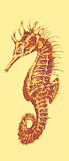 Seahorse Digital Art Metal Prints - Seahorse - Right Facing Metal Print by Jane Schnetlage