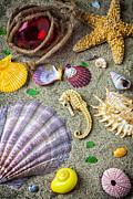 Shell Texture Posters - Seahorse with many sea shells Poster by Garry Gay