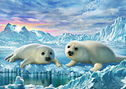 Seal Pups Print by Adrian Chesterman