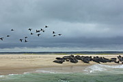 Amazing Jules - Seals and Sea Birds